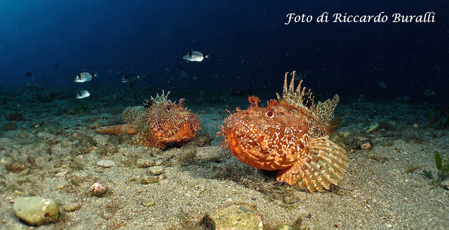 Wunderbaren Meeresgründe auf der Insel Elba