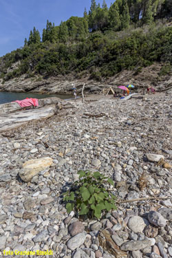 Strand von Buzzancone auf Insel Elba