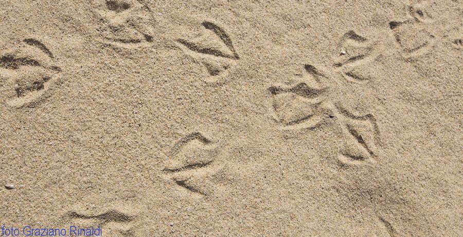 Sand auf dem Strand von Forno, Portoferraio, Insel Elba