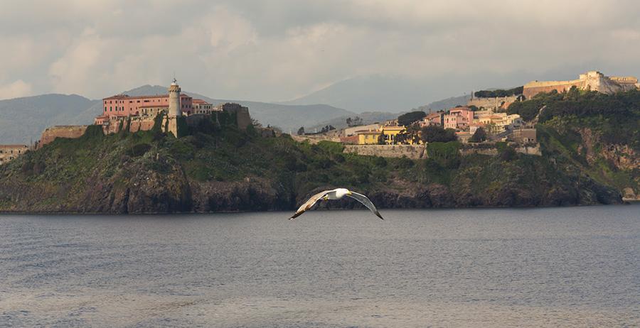 Portoferraio Insel Elba - Möwe im Flug
