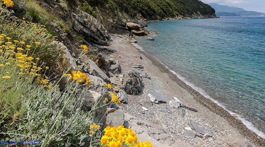 Insel Elba, strand, Viticcio