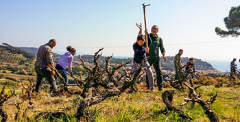 Insel Elba, Chanti, wine, Natur
