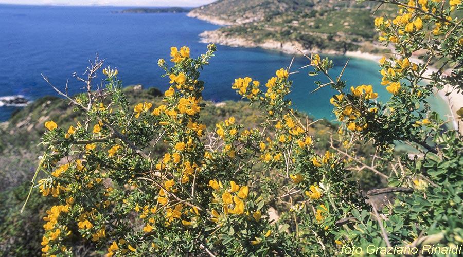 Insel Elba, Italien, Toskana, Flora