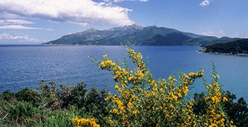 Foto von:  Mediterrane Macchia, eine alte Geschichte