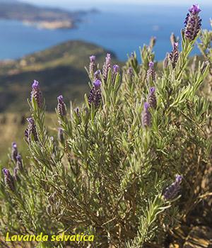 Insel Elba, Natur, trekking, Fruehling