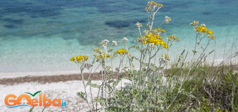Foto: Apologie an den Frühling …auf der Insel