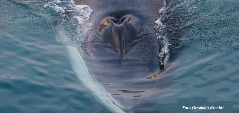 Foto: Mein Treffen mit dem Wal auf der Insel Elba